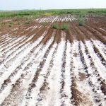 agriculture gypsum